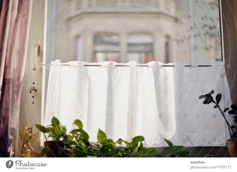 ausblick Fenster Fensterscheibe Vorhang Gardine Stoff Topfpflanze Häusliches Leben Stadthaus Gebäude Sonnenstrahlen Licht