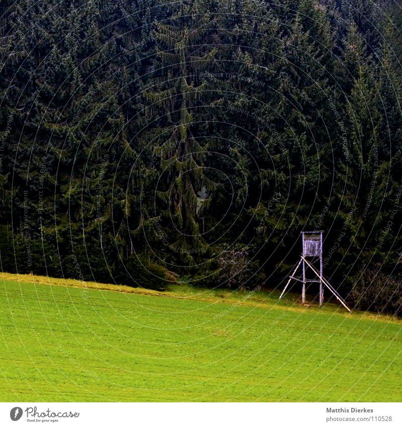 hochsitz Natur Wald Herbst Wiese wandern trist Spaziergang bedrohlich beobachten Idylle Tanne Jagd Weide Jäger Nachmittag Hochsitz