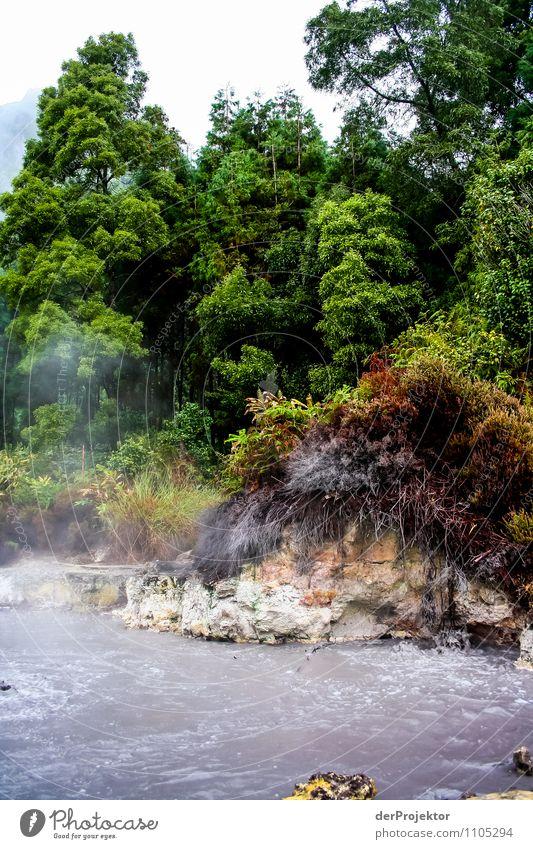 Und hier wird essen gekocht Natur Ferien & Urlaub & Reisen Pflanze Sommer Baum Meer Landschaft Tier Berge u. Gebirge Umwelt Gefühle See Tourismus Insel Ausflug Urelemente