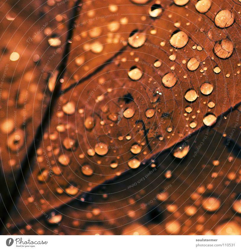Schmuddelwetter Wasser Pflanze Blatt schwarz Tod Herbst grau braun Regen nass Wassertropfen fallen Gefäße spät Blattgrün Gelbstich