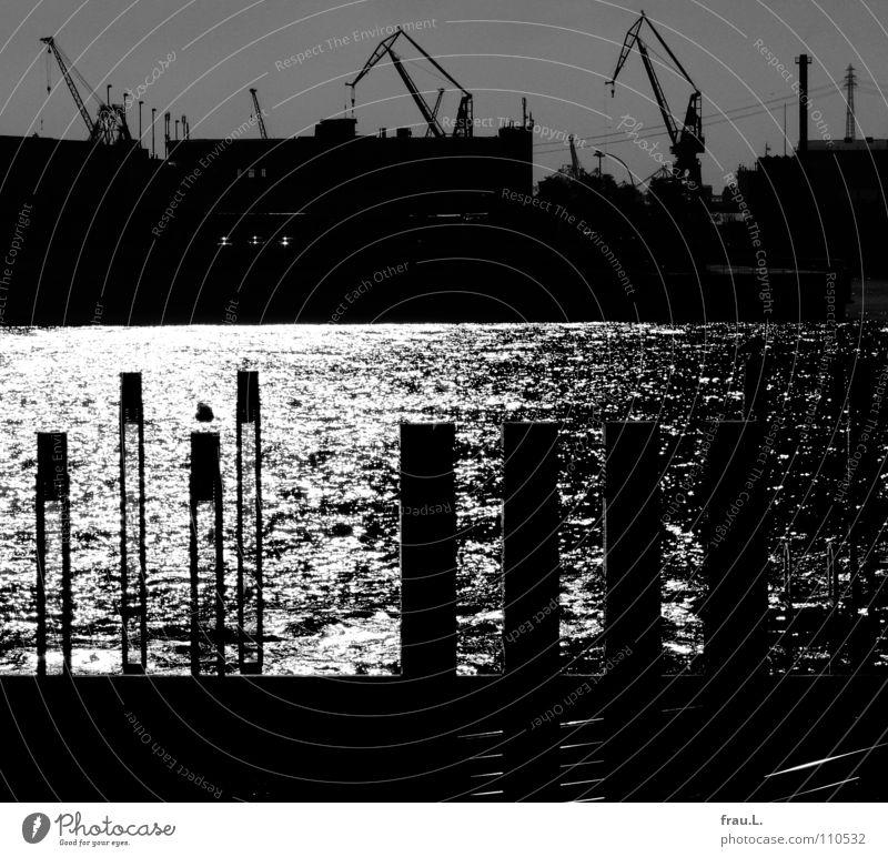 Hafen Sonne Wasser Hamburger Hafen Hafenstadt Schifffahrt schön Kran Schiffswerft Anlegestelle Möve Elbe Reflexion & Spiegelung Gegenlicht