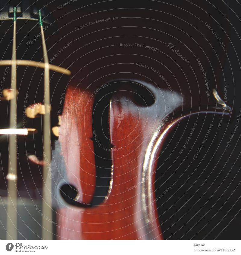 Finale furioso Musik Musik hören Konzert Musiker Orchester Geige Streichinstrumente Musikinstrument Saiteninstrumente Schalloch Steg Holz braun rot schwarz