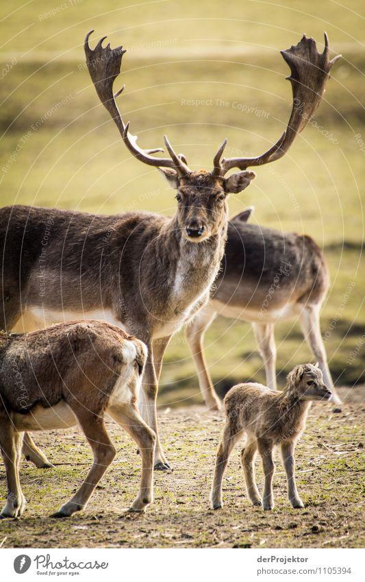 Schön aufpassen, Papa! Natur Ferien & Urlaub & Reisen Pflanze Landschaft Tier Ferne Tierjunges Umwelt Frühling Wiese Familie & Verwandtschaft Freiheit Park