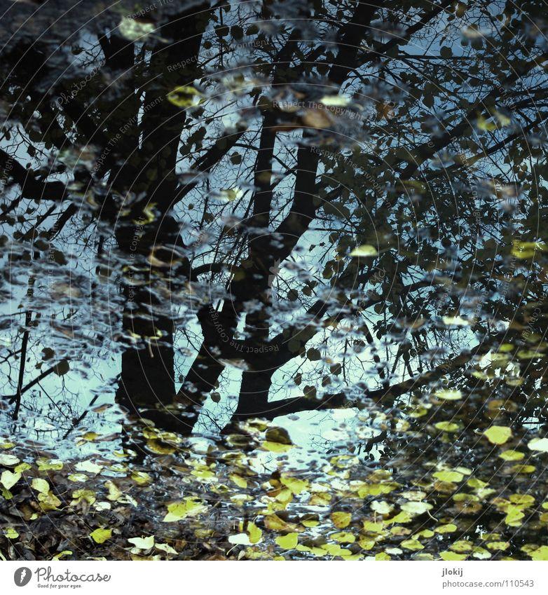 Herbsttag Pfütze Jahreszeiten Baum Blatt Reflexion & Spiegelung Wasser Regen Ast