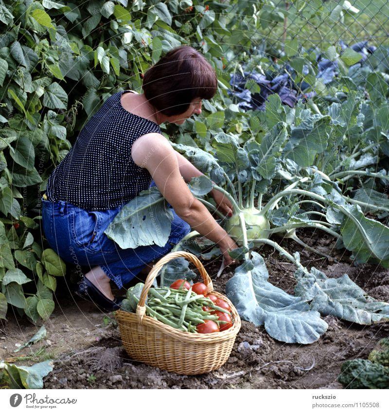 Gemueseernte; Frau Natur Erwachsene Herbst Garten Arbeit & Erwerbstätigkeit Gemüse Ernte Alternativmedizin Korb Heilpflanzen Kohlrabi Hausmittel