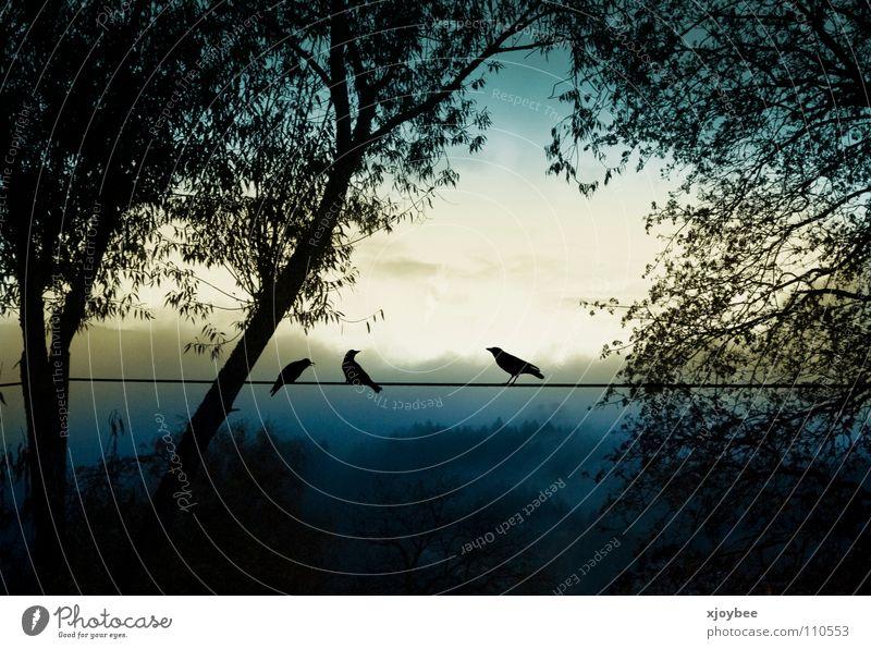 Morgenstund Baum Tier Herbst Landschaft Vogel Nebel Kabel
