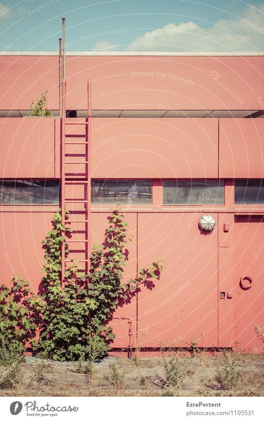 grün gegen rot Himmel Wolken Sonne Pflanze Blatt Wildpflanze Haus Bauwerk Gebäude Architektur Mauer Wand Fassade ästhetisch blau Fenster Leiter Lampe Ranke