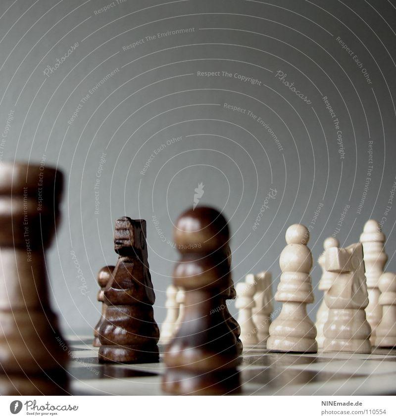 feiner Zug ... Schach Schachbrett Spielen Brettspiel planen Eisenbahn Feld braun weiß Gedanke Denken Schachfigur schwarz Pferd Erfolg verlieren Verlierer ruhig