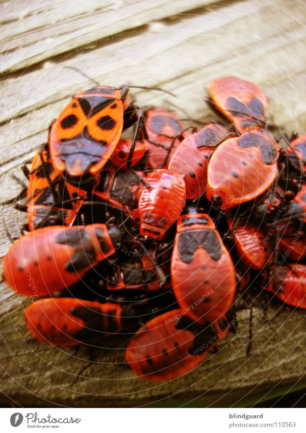 Kuschelgruppe Natur Sommer rot Holz Beine Garten 2 Zusammensein mehrere Tiergruppe Flügel Punkt viele Ball Insekt Gesellschaft (Soziologie)