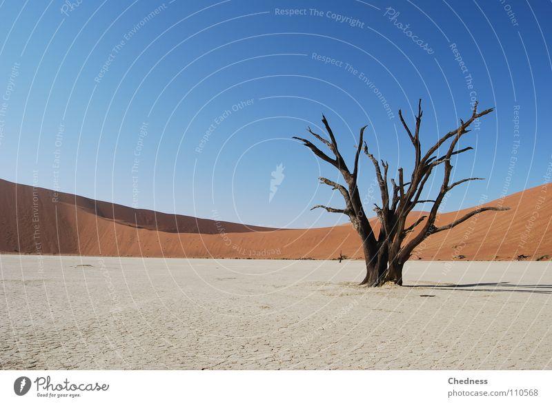 A. Kazien ruhig Landschaft Wüste blau rot Tod Vergänglichkeit Sossusvlei Akazie Namibia Skelett Ödland Afrika Baumgerippe Stranddüne Textfreiraum links