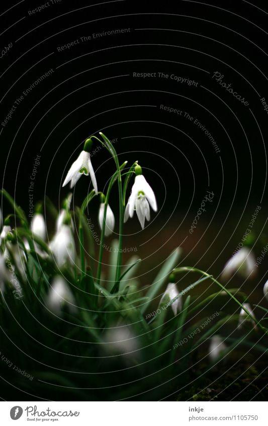 Lichtblick Natur Pflanze schön grün weiß Blume dunkel schwarz Gefühle Frühling natürlich klein Garten Stimmung hell Wachstum