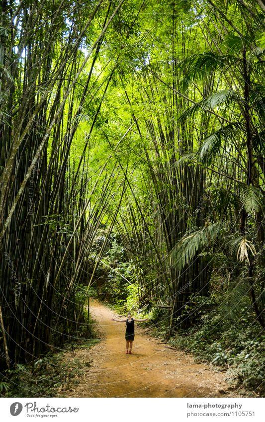 Big Nature Junge Frau Jugendliche Erwachsene 1 Mensch exotisch Bambus Bambusrohr Urwald Nationalpark Khao Sok Thailand Asien groß klein grün Größe Farbfoto