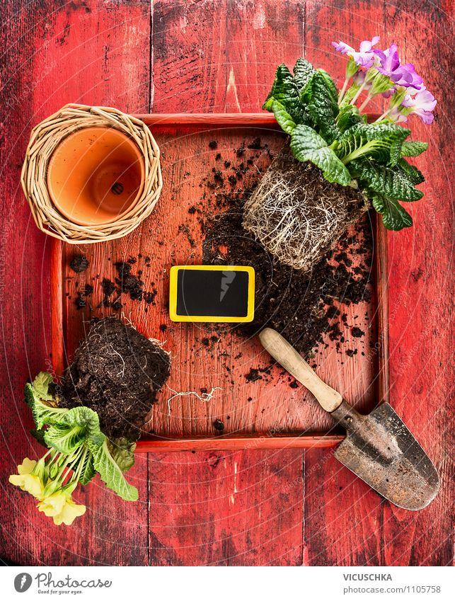 Sommer Blumen, Schaufel und Blumentopf Natur alt Pflanze rot Leben Stil Garten Lifestyle Freizeit & Hobby Design Dekoration & Verzierung Erde retro Gerät