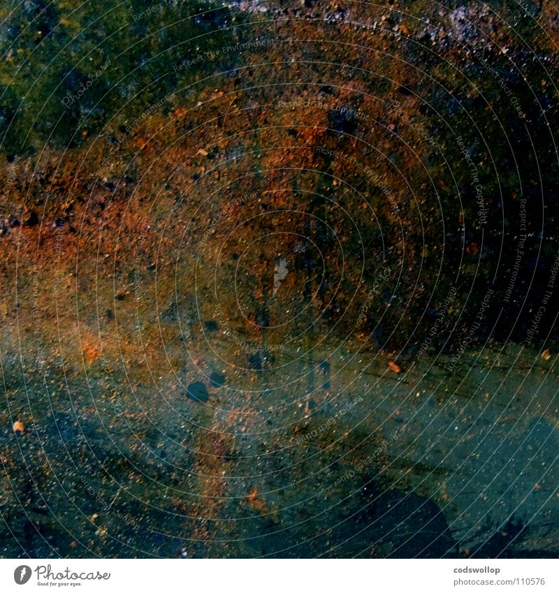L'automne - Bords de l'Elbe près de Hambourg Wasser Baum Herbst Landschaft Küste Kunst Fluss Kultur Rost Gemälde Rust Oxidation