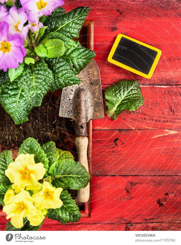 Kleingarten mit Primeln Blümen, Schaufel und Schild Natur Pflanze Sommer Blume Blatt Haus Leben Blüte Innenarchitektur Stil Holz Hintergrundbild Garten