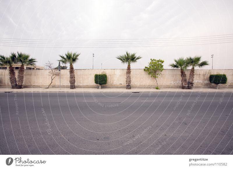 street near larnaka Wolken Straße Palme Verkehrswege Zypern