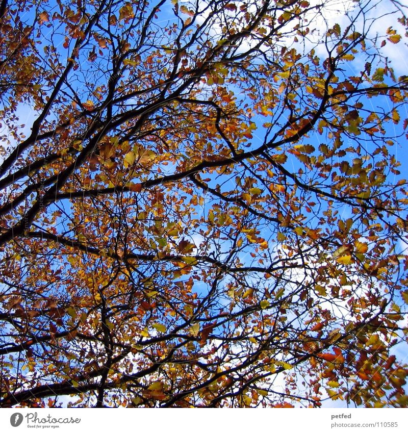 Mein geliebter Herbst Natur Himmel weiß Baum blau Winter Blatt Wolken gelb Leben braun Wetter Ast Jahreszeiten