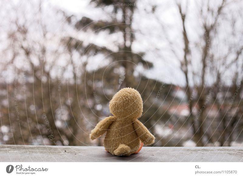 die große, weite welt Baum Mauer Wand Stofftiere sitzen klein niedlich Neugier Hoffnung Sehnsucht Fernweh Einsamkeit Angst Zukunftsangst Erwartung Perspektive