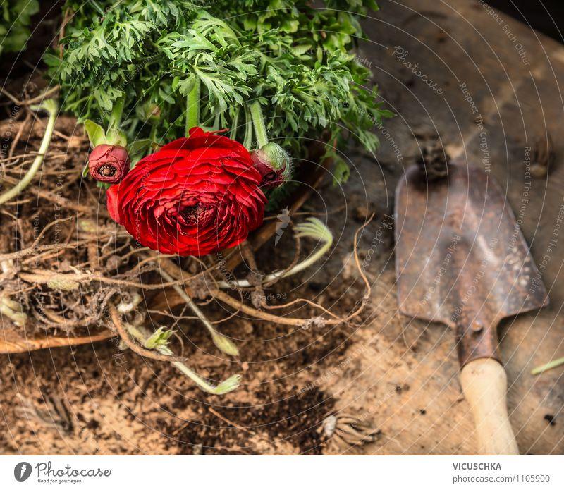 Blumen, Wurzel, Erde und alte Handschaufel elegant Stil Freizeit & Hobby Garten Tisch Natur Pflanze Frühling Sommer Herbst Blatt Blüte Topfpflanze Design