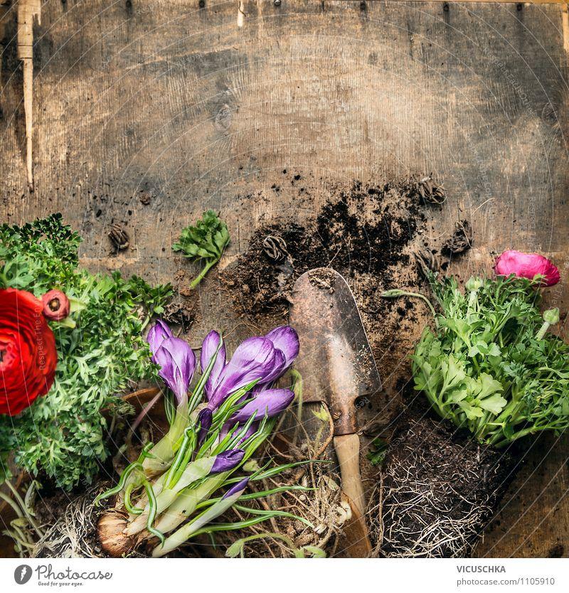 Gartentisch mit Schaufel , Blumen und Erde Stil Design Sommer Tisch Natur Pflanze Hintergrundbild Composing Topfpflanze alt Holztisch Gartenarbeit Wurzel