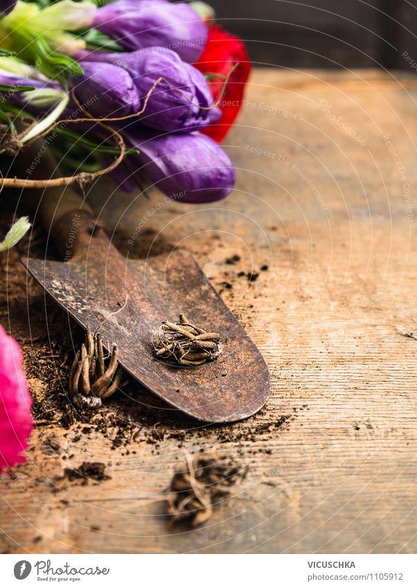 Alte Schippe mit Blumenzwiebeln und Blumen auf Holztisch Natur Pflanze Sommer Blüte Frühling Stil Garten Design Freizeit & Hobby Tisch Blühend Gerät