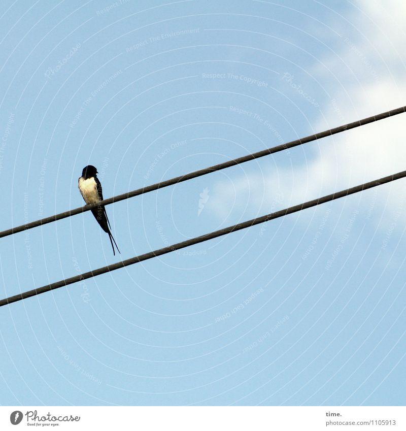 Kabelfernseher Himmel Erholung Wolken Tier Ferne klein Vogel Energiewirtschaft sitzen warten ästhetisch hoch Technik & Technologie beobachten Schönes Wetter