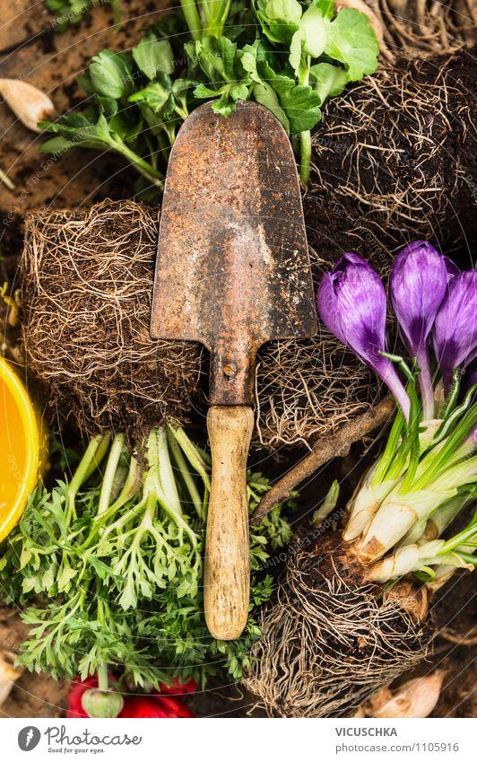 Alte Garten Schaufel auf Blumenwurzel Natur Pflanze Sommer gelb Frühling Stil Hintergrundbild Lifestyle Freizeit & Hobby Design Erde Dekoration & Verzierung