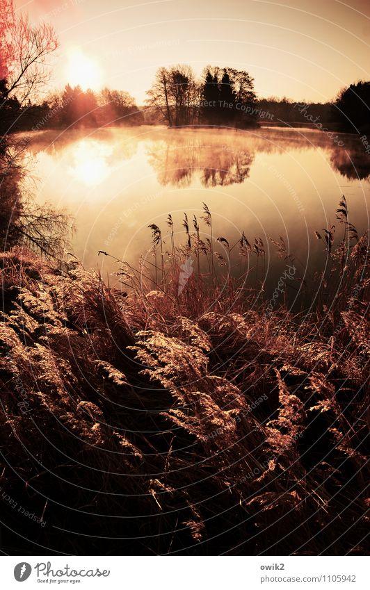 See in Sepia Umwelt Natur Landschaft Pflanze Wasser Wolkenloser Himmel Horizont Schönes Wetter Nebel Baum Sträucher Röhricht Seeufer Teich glänzend leuchten