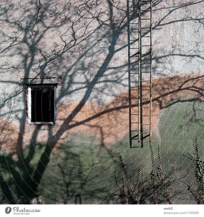 Notausgang Umwelt Natur Schönes Wetter Pflanze Baum Ast Zweige u. Äste Mauer Wand Fassade Fenster Feuerleiter geduldig ruhig Farbfoto Außenaufnahme