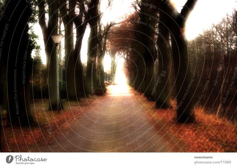 Road to heaven Allee Herbst Überbelichtung Straße Sonne