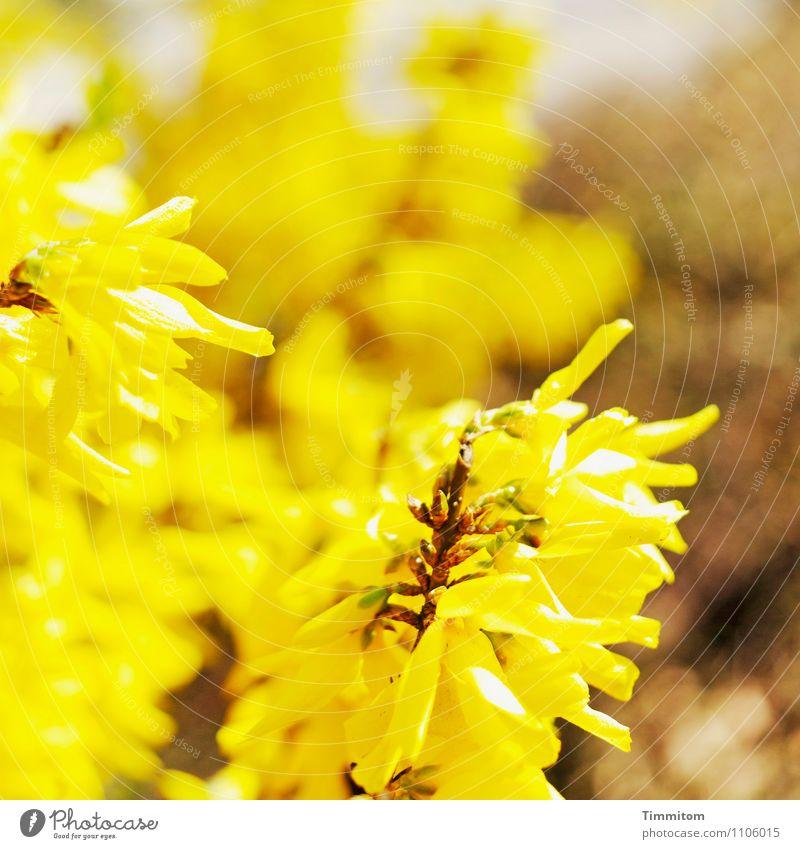 Happy Birthday barbaclara! Natur Pflanze Umwelt gelb Gefühle Blüte braun hell ästhetisch Blühend einfach Hoffnung