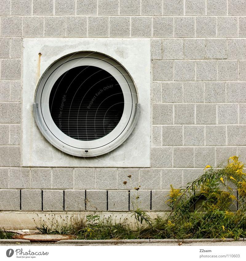 luke oder waschmaschine Luke Fenster graphisch einfach Backstein Wand Geometrie grün Pflanze Wiese Beton Wachstum bewachsen schwarz Öffnung Eingang Ausgang grau