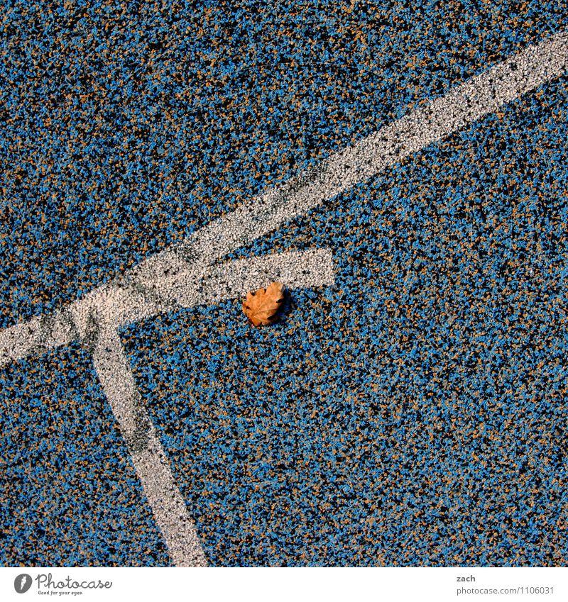 liegengeblieben Sportstätten Fußballplatz Stadion Rennbahn Herbst Pflanze Blatt Stadt Linie rennen blau Herbstlaub Herbstfärbung Gedeckte Farben Außenaufnahme