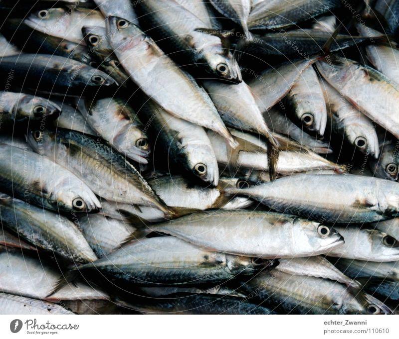 Fisch und fertig! Natur Meer Tier Umwelt Auge Tod Sand liegen Lebensmittel dreckig frisch Ernährung Fisch Kochen & Garen & Backen Müll Gastronomie
