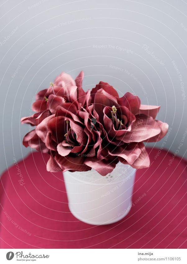 Marsala Natur Pflanze schön rot Blume Blüte natürlich grau Dekoration & Verzierung ästhetisch Kitsch Blumenstrauß Duft Stillleben falsch Krimskrams
