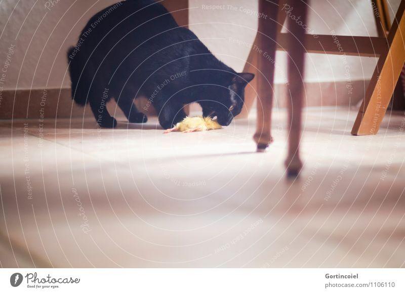 ...Karnivoren Tier Haustier Katze Vogel Fell 1 natürlich Katzenfutter Fressen Eintagsküken Küken Artgerechte Ernährung artgerecht schwarz Fleischfresser