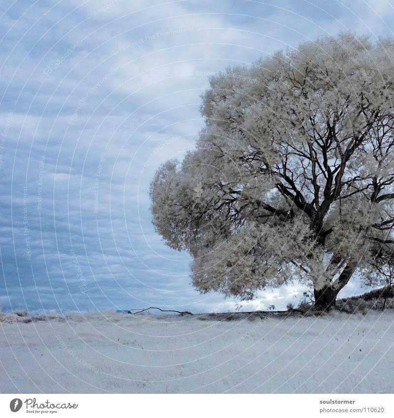 Baum im Quadrat gefangen! Himmel blau weiß Baum Blatt Wolken schwarz Berge u. Gebirge Gras Wege & Pfade grau Erde Ast Rasen Hügel Surrealismus