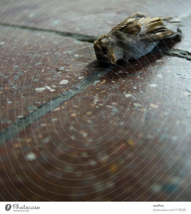 Robin kalt Tod Vogel Trauer Boden Ende liegen Vergänglichkeit Verzweiflung Abschied Spatz Totes Tier