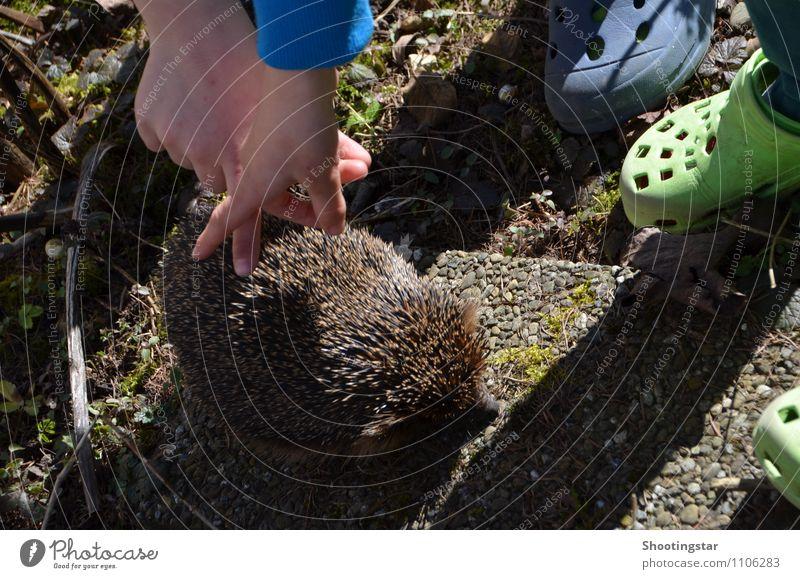 touch it Umwelt Garten Tier 1 außergewöhnlich Coolness Freundlichkeit Zusammensein natürlich niedlich stachelig Vertrauen Tierliebe Schüchternheit lernen
