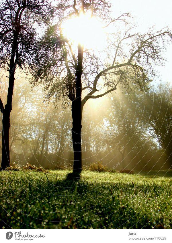 morning sunshine Sonnenstrahlen Licht Erkenntnis Baum Wiese Nebel Herbst Himmelskörper & Weltall schön Morgen Seil morgrntau jarts