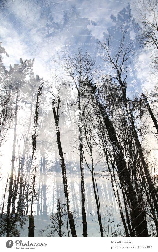 Wald Himmel Natur Ferien & Urlaub & Reisen blau Pflanze Baum Landschaft Blatt Tier Umwelt Gefühle Stil Holz grau außergewöhnlich