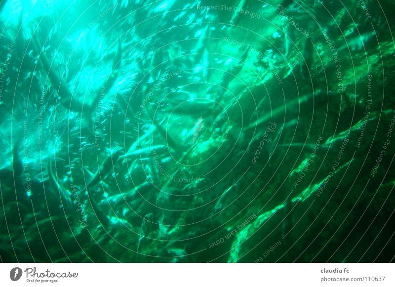 deep green Wasser Meer Tier Farbe Fisch tief Anhäufung Schwarm