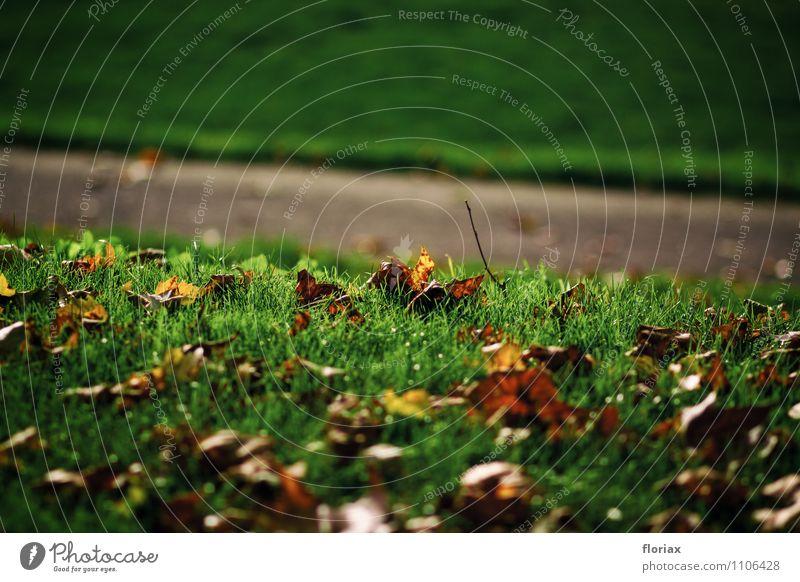 abendsonnenherbstlaub Natur grün Baum Blatt Landschaft ruhig Umwelt Herbst Gefühle Wege & Pfade Glück Denken braun Stimmung liegen Park