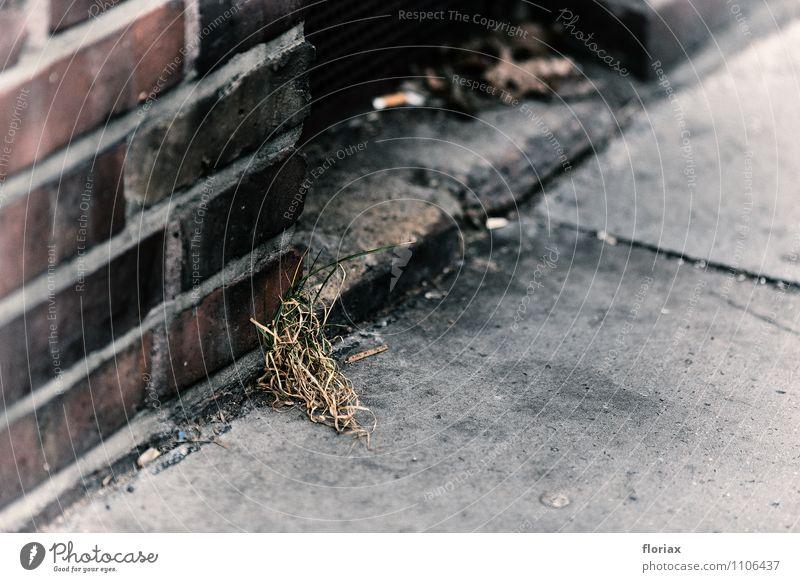 aussichtslos Umwelt Natur Pflanze Gras Stadt Menschenleer alt Wachstum dreckig dunkel kalt grau grün Gefühle Tapferkeit Ausdauer Hoffnung Traurigkeit Sorge