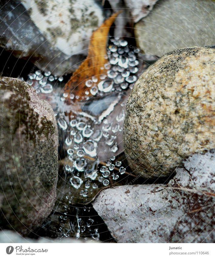 Spiderfalls Blatt Herbst Stein Wassertropfen Seil fallen Wasserfall Spinne Farbe