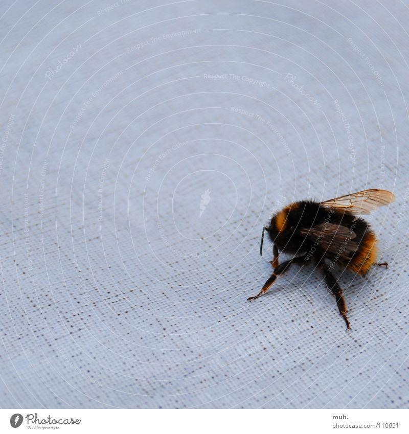 Suchst du was...? Biene Wespen Suche Honig Blüte schwarz gelb Sommer gefährlich fliegen