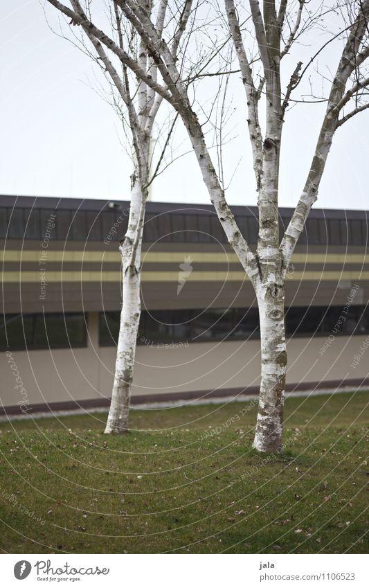 birken Himmel Natur Pflanze Baum Architektur Wiese Gras Gebäude Garten Park trist einfach Bauwerk