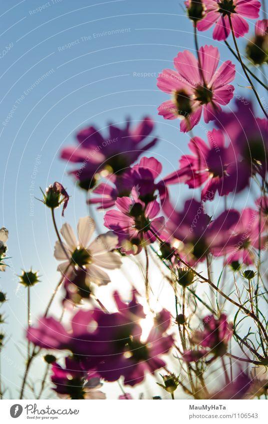 Himmel Natur Pflanze Sonne Blume Blatt Freude Gras Blüte Garten Park Luft Feld Fröhlichkeit Klima Schönes Wetter
