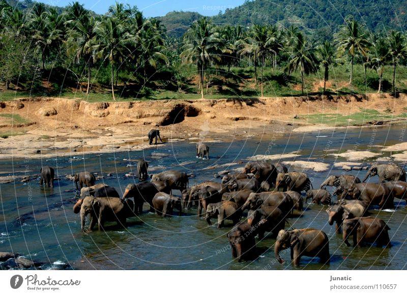 Hauptverkehrszeit Wasser Urwald Indien Elefant Flußbett