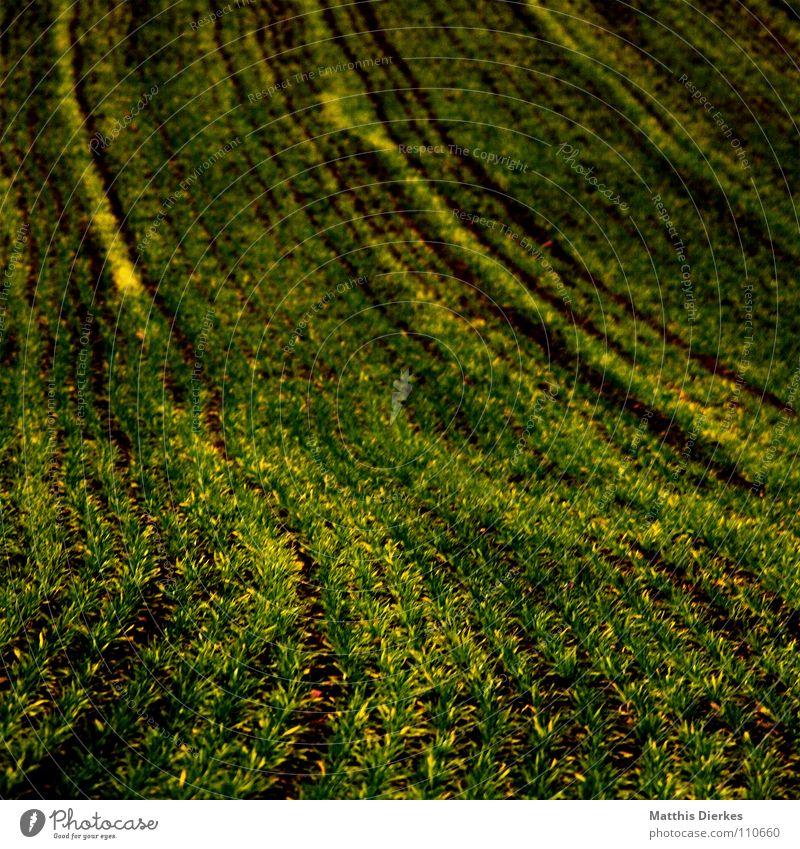 acker Natur Pflanze schön Sommer Einsamkeit ruhig Traurigkeit Herbst Wiese Tod Denken Lampe Linie Zusammensein Arbeit & Erwerbstätigkeit Horizont